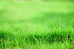 背景域草绿色 夏天backgr的新鲜的绿色草甸 库存照片