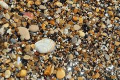 背景夏天贝壳和石头 免版税库存照片