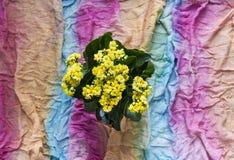 背景多彩多姿的围巾女用披肩布料波浪彩虹白棉布花calandiva黄色 免版税库存图片