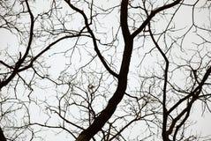 背景大天空结构树 图库摄影