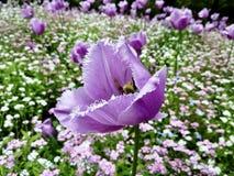 背景大装饰花园查出鸦片白色 免版税库存图片