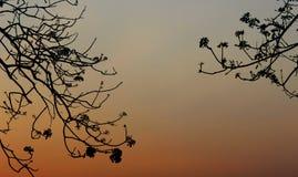 背景天空和结构树 免版税图库摄影