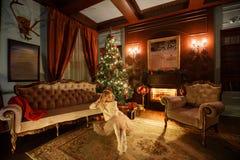 背景对光检查圣诞节构成黑暗的夜间新的s玩具年 有咖啡的年轻美丽的白肤金发的妇女在经典公寓的一个白色壁炉,装饰 库存图片