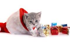 背景小猫演奏白色 库存图片