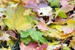 背景小组秋天五颜六色的叶子 室外 库存图片