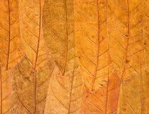 背景干燥叶子 库存照片