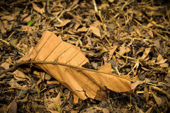 背景干燥叶子 免版税图库摄影