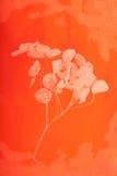 背景干花卉桔子 免版税图库摄影