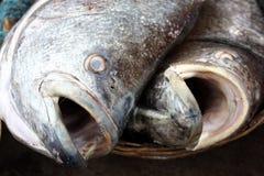 背景开放鱼的嘴 免版税库存照片