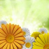 背景开花本质 免版税库存照片