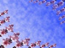 背景开花桃子 图库摄影