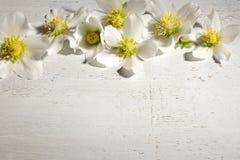 背景开花的樱桃接近的花卉日本春天结构树 免版税库存照片