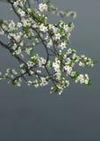 背景开花的结构树 库存图片