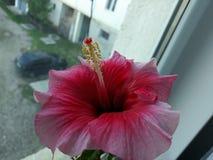 背景开花的花种子向日葵 库存图片