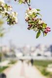 背景开花的苹果树和海边在Kadıköy散步 免版税图库摄影