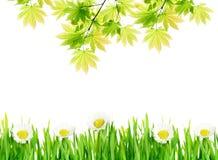 背景开花绿色叶子 库存照片