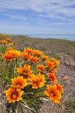 背景开花通配的海洋 库存照片