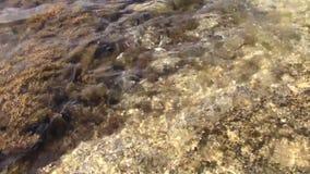 背景彩色插图模式无缝的向量水 股票视频
