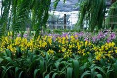 背景影像黄色兰花花的被弄脏的领域 库存图片