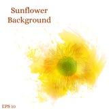 背景接近的向日葵 水彩黄色花 库存照片