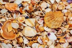 背景接近的收集贝壳贝壳 库存照片