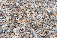 背景接近的收集贝壳贝壳 免版税库存图片