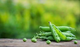 背景接近的绿豆豌豆荚上升白色 免版税库存图片