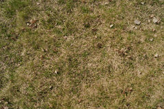 背景接近的草绿色宏观纹理 免版税库存图片