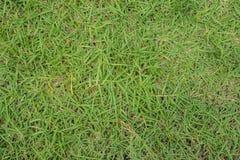 背景接近的草绿色宏观纹理 库存图片