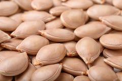 背景接近的食物南瓜籽 免版税库存图片