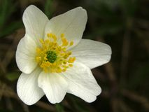 背景接近的黑暗的花兰花 免版税库存图片