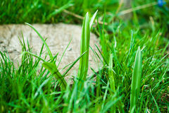 背景接近的dof草绿色本质浅夏天事宜 背景蓝色云彩调遣草绿色本质天空空白小束 图库摄影
