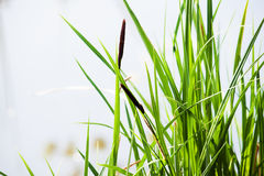 背景接近的dof草绿色本质浅夏天事宜 背景蓝色云彩调遣草绿色本质天空空白小束 免版税库存图片