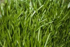 背景接近的dof草绿色本质浅夏天事宜 免版税库存照片