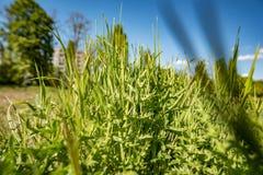 背景接近的dof草绿色本质浅夏天事宜 免版税库存图片
