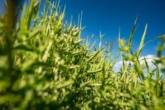 背景接近的dof草绿色本质浅夏天事宜 图库摄影