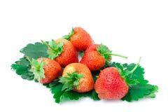 背景新查出的宏观草莓工作室白色 免版税库存照片