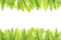 背景新绿色留下白色 免版税库存图片