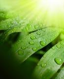 背景新绿色 免版税图库摄影