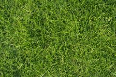 背景新草绿色 公园草坪纹理 库存图片