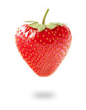 背景新草莓白色 图库摄影