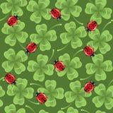 背景无缝三叶草的瓢虫 免版税图库摄影