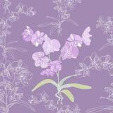 背景无缝兰花的兰花植物 免版税图库摄影