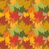背景无缝叶子的槭树 库存照片