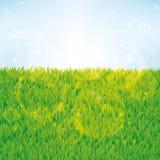 背景无缝草绿色的模式 免版税库存图片