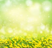 背景明亮的春天 库存图片