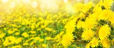 背景明亮的春天 免版税库存照片