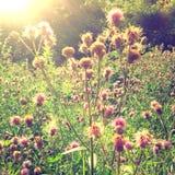 背景明亮的春天 库存照片