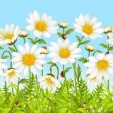 背景春黄菊无缝的向量 库存照片