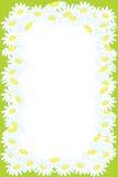 背景春黄菊花卉花框架 库存照片